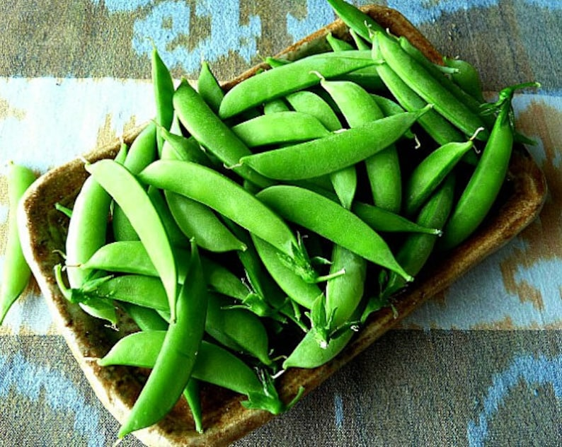 Sugar Snap Peas, 15 seeds, fall garden, cool weather crop, heirloom bush peas, early harvest, easy to grow, fun for kids photo