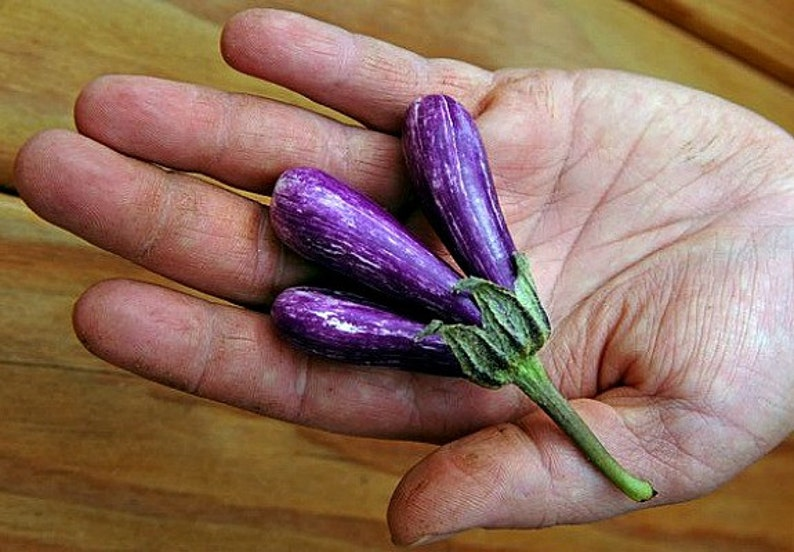 Mini Eggplant, Little Fingers, 15 seeds, Asian heirloom, non GMO, patio container garden, miniature fruit, sweet and tender, farmers market photo