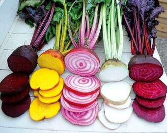 Rainbow Beet Collection, five fancy heirlooms, 300 mixed seeds, fall garden, saute, salads, juice, cool weather crop, easy to grow, non GMO