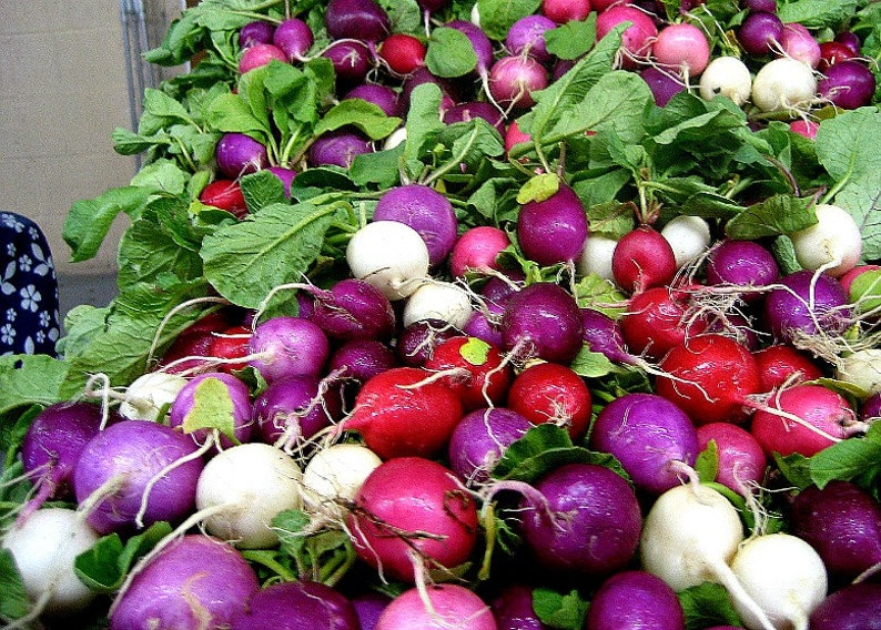 Rainbow Radish Mix, 250 seeds, crazy colors, classic heirlooms, plant in fall, loves cool weather, kid's garden, grownup's salad photo