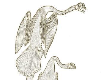Among Us - Vintage Dinosaur Birds in Nature - Anhinga Dilophosaurus - 8x10 Inch Print - Free Shipping