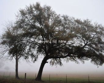Leaning Tree Landscape Art DIGITAL Download Photography Rustic Woodlands Nature Background Graphics Farm Fog COMMERCIAL LICENSE