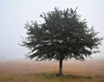 Tree in Fog Landscape Art DIGITAL Download Photography Rustic Woodlands Nature Background Graphics Farm Minimalism COMMERCIAL LICENSE