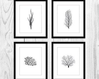 "White and Black Coral Printable Bathroom Artwork (Set of 4, 5x7"")"