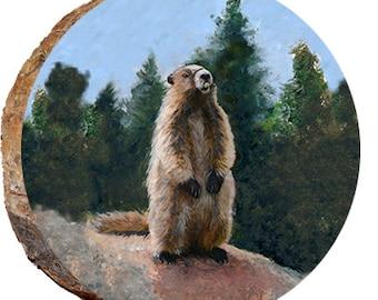 Marmot - DAS023