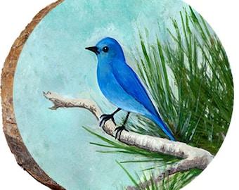 Mountain Bluebird - DAI066