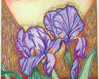 Bearded Iris Original Ink Pen and Colored Pencil Drawing