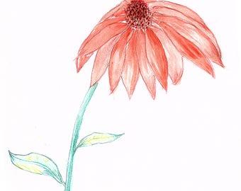 Cone Flower - original watercolor, 9x12