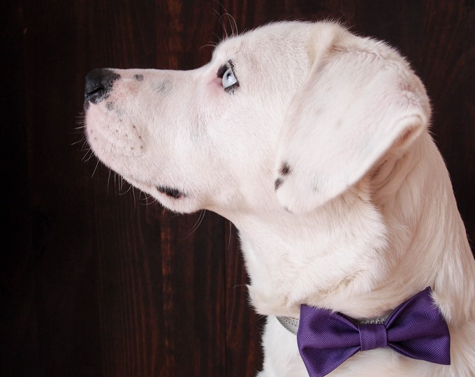 Purple removable dog bow tie, elegant dog gift, formal dog accessories for a wedding for medium and large dogs