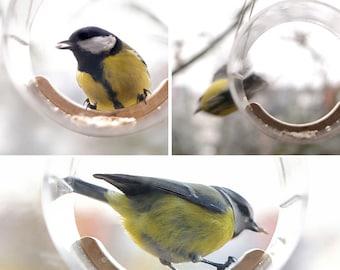 Bird Feeder, Modern Bird Feeder, Clear, Bird Feeder Window, Hanging bird feeder, Bird watching, Mimalistic, Small, Bird lover gift, Tube
