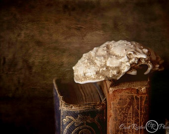 Discoveries, Vintage Style Photos, Still Life Photography, Photographic Art, Gothic, Fine Art Photography, Halloween, Wall Art, Office Decor