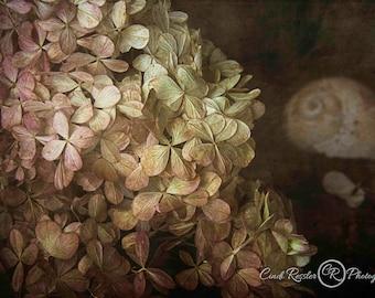 Hydrangea, Still Life Flowers, Still Life Art, Photography Prints, Floral Still Life, Flower Photography, Photo Artistry, Floral Photo