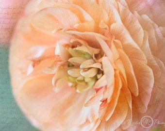 Ranunculus , Ranunculus Photography, Flower Photo, Floral Photo, Photo Artistry, Floral Photography, Floral Wall Art, Flower Gift Idea