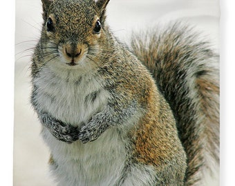 Gray Squirrel, Fleece Blanket, Plush Fleece Blanket, Cozy Blanket, Squirrel Blanket, Floral Photography, Wildlife Photo, Gift Idea