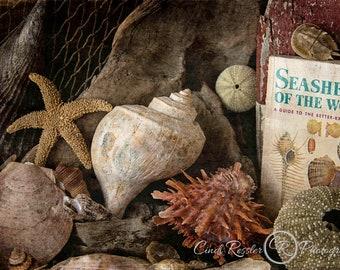 World of Seashells,