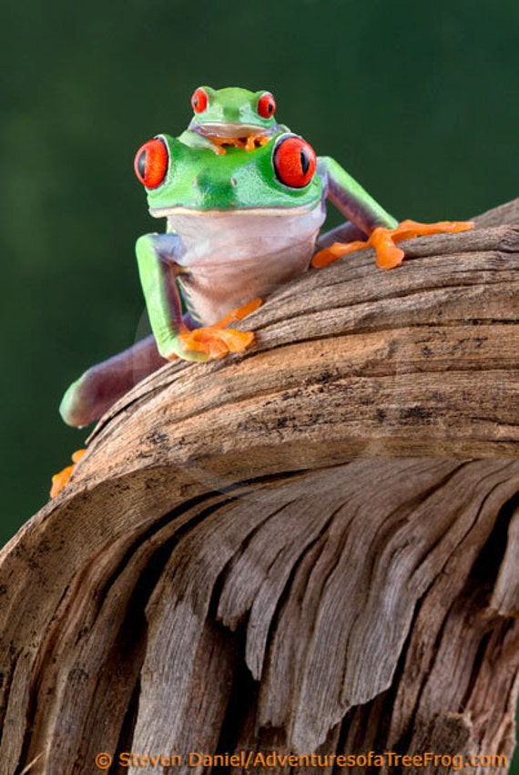 Two Frogs On A Log Mother Baby Frog Art Etsy