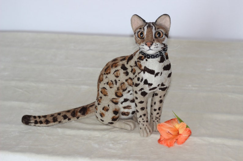 Asian Leopard Cat Pet - Sex Photo-4963