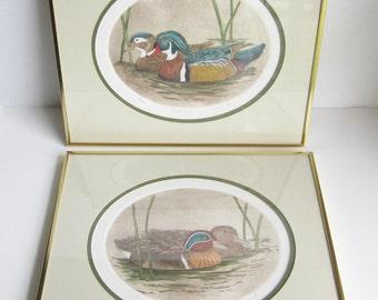 Original Dianne Krumel Vintage Duck Etchings, Duck Art, Wood Ducks, Nature Decor, Brass Framed Art, Nature Etchings