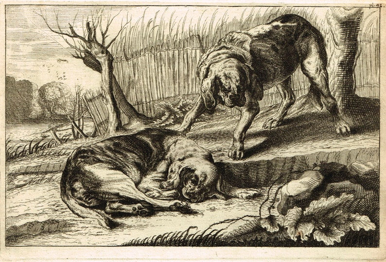 Antique French 18th century etching engraving print of dogs by Jean Le Pautre published by Pierre Mariette Paris