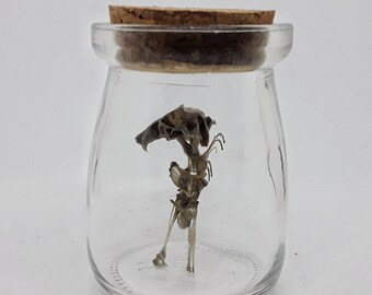Nature Curiosities, Scary Home Decor, Sideshow, Conjoined Twins, Skulls, Taxidermy Oddities, Sculptures, Something Different, Collect