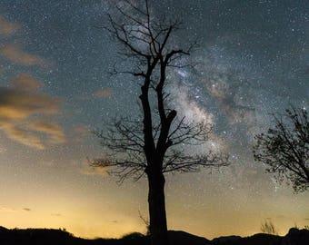 Tree Lights - Milky Way Photography - Shenandoah National Park - Astrophotography, Stars - Virginia Print - Landscape Photography