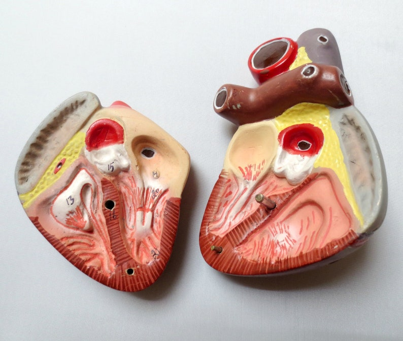 Vintage Anatomical Heart Model with Numbers, Hand-painted, Ceramic/Plaster,  5