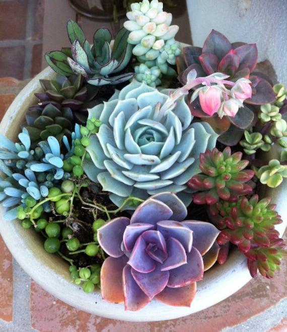 image 0 - Dish Garden Plants