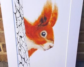 Red Squirrel - Art Print