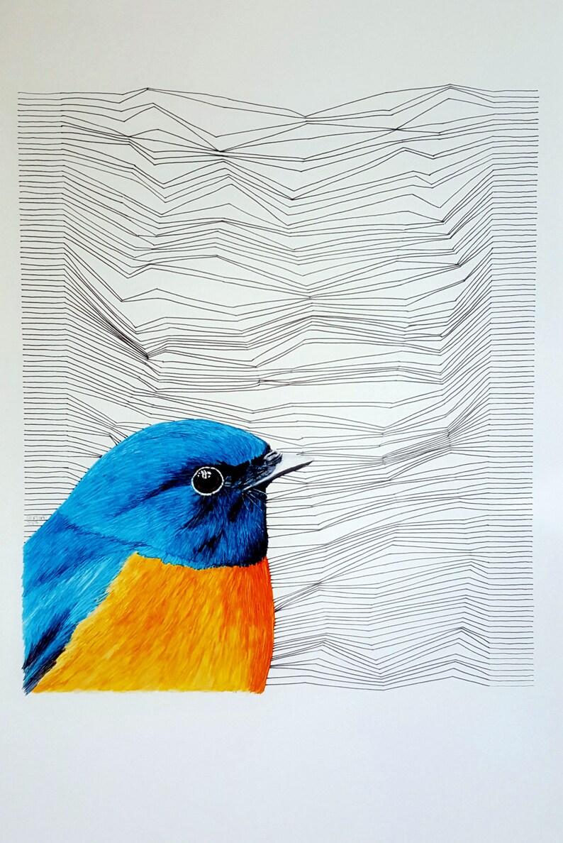 Original Rufous Bellied Niltava Marker Pen Drawing Bird Art Bird Illustration Bird Gift