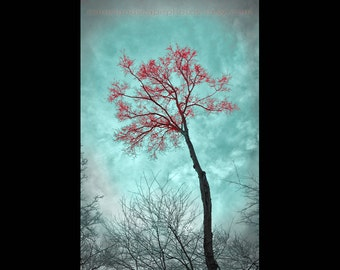 Teal and Red Art -Landscape Tree Photograph, Forest - Teal Home Decor - Wall Art Color Art Print