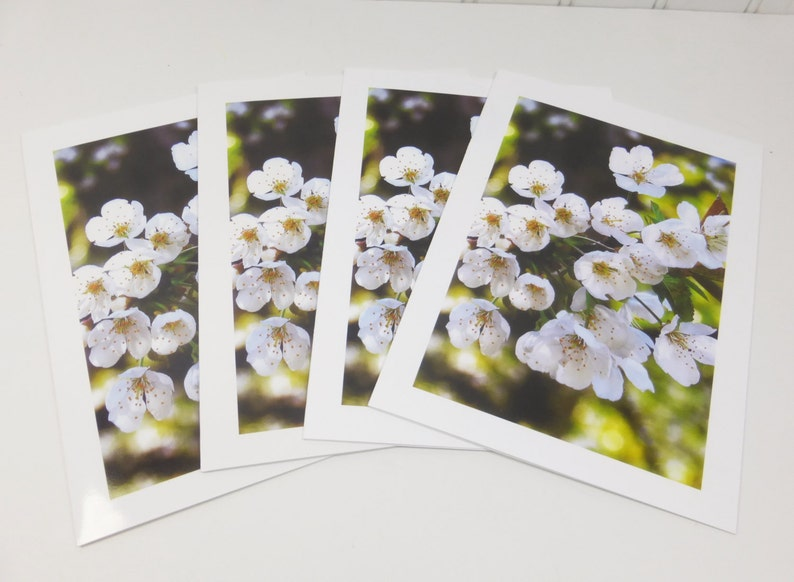 White Cherry Blossoms Greeting Cards Blooming Spring Flower 5 image 0