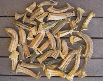 """40 Small, Medium & Large Natural Dried Cleaned Pumpkin Stems 2"""" to 7"""""""