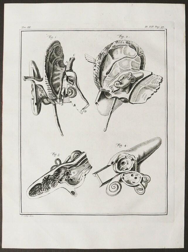 1750 Antik Kupferstich der menschlichen Ohr Anatomie. | Etsy