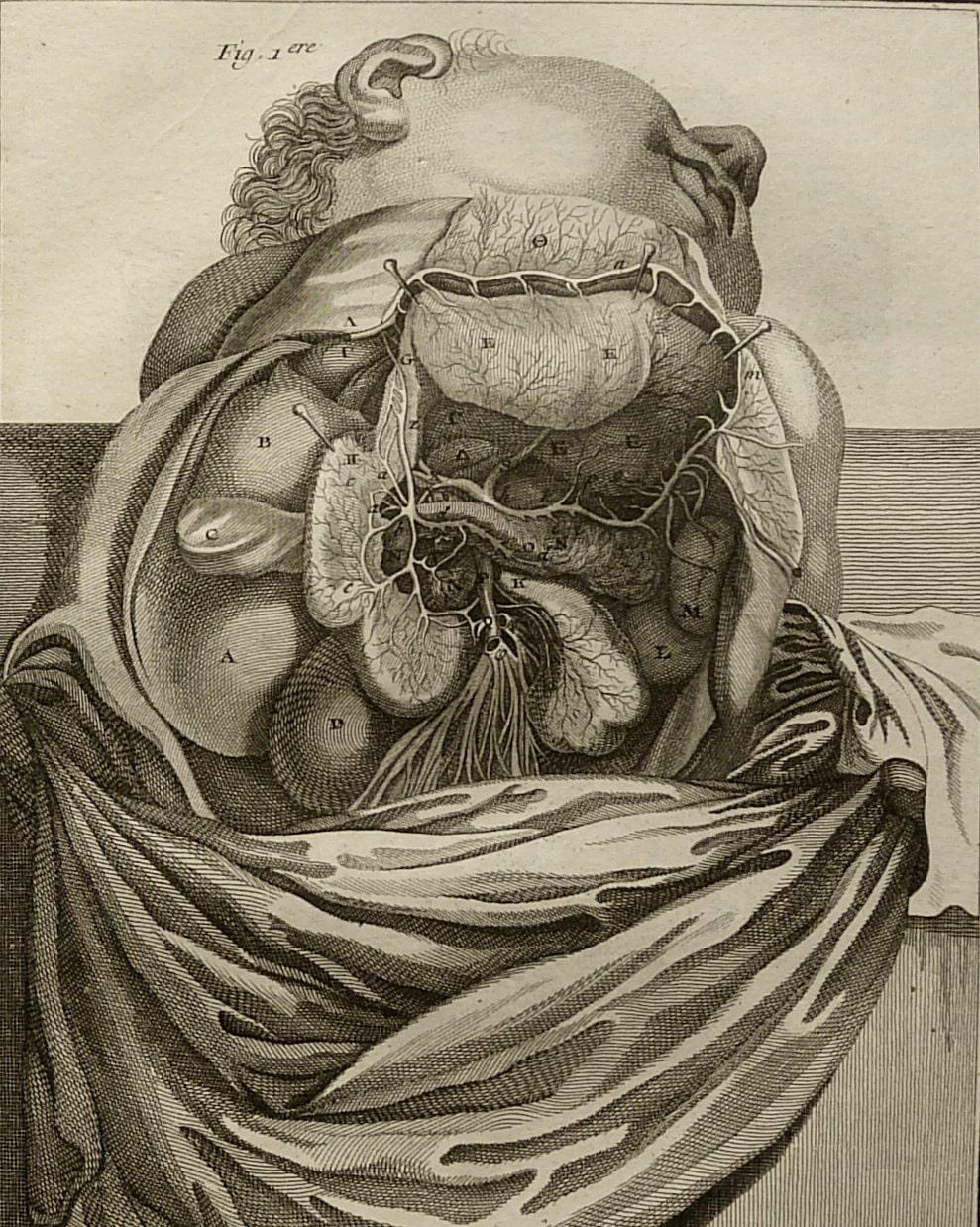 1779 antike genial Kupferstich der menschlichen Anatomie. | Etsy