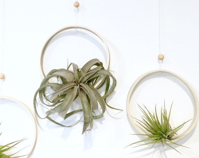 Airplant Ring Cradle Sling Hanging Planter Display for Air Plant MADE TO ORDER #airplant #plantcradle #airplantsling