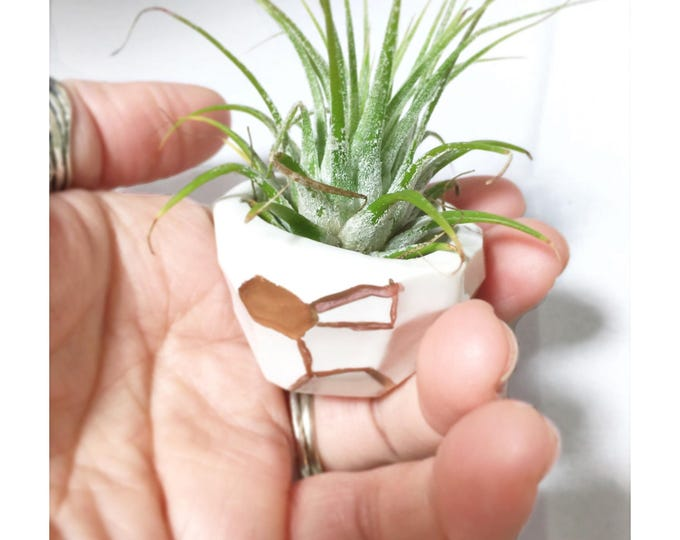 Geo Tiny Planter Petite Small Perfect Air Plants or Baby Plants Pot Container #FREESHIPPING