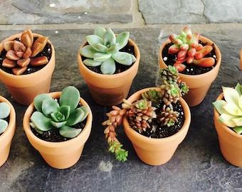 15 Succulent favors, Terra-cotta, Mini centerpieces, 2 inch pots, Wedding favrs, Mini cuties, Colorful cuttings