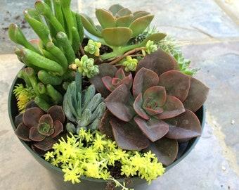 Free Shipping, Succulent Terrarium,  DIY succulents, Succulent Centerpieces, Dish Garden,  Gift, Mothers Day