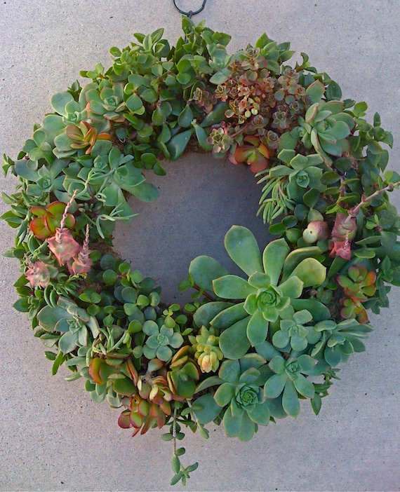 Free Shipping 13 Succulent Wreath Kiy Diy Wreath Gift Christmas Decor Door Hanging Centerpiece