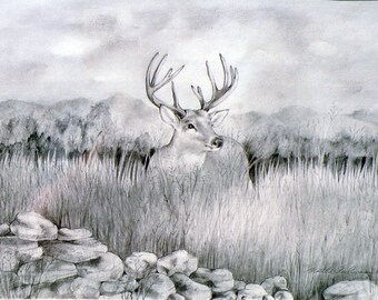 Grassland Whitetail, 5 x 7 print on acid free 8.5 x 11, 65 lb., off-white matte, signed by me, carefully shipped flat.