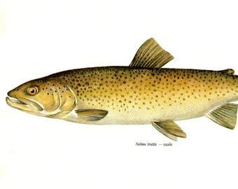 Vintage SEA TROUT Fish Print Fishing Wall Art  Fish Art Print Fishing Decor Lake House Decor Male Sea Trout Gift For Fisherman Dad 2816