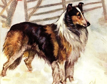 BORDER OR ROUGH COLLIE DOGS AND FLOCK LOVELY DOG PRINT MOUNTED READY TO FRAME