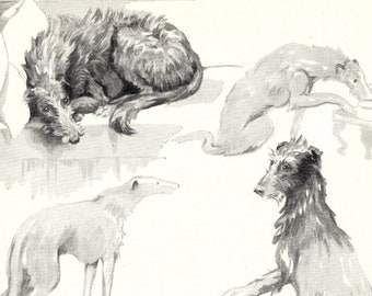 SCOTTISH DEERHOUND CHARMING VINTAGE 1930/'S DOG ART PRINT by KF BARKER