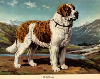 9c6173252bbc 1942 Antique ST BERNARD Dog Print Vintage Megargee Pet Art Print Birthday  Gift for Dog Lover Wall Art Home Library Decor 4380