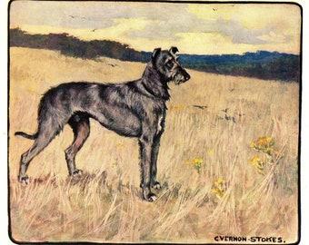 SCOTTISH DEERHOUND OLD STYLE NAMED CHAMPION DOG PRINT MOUNTED READY TO FRAME