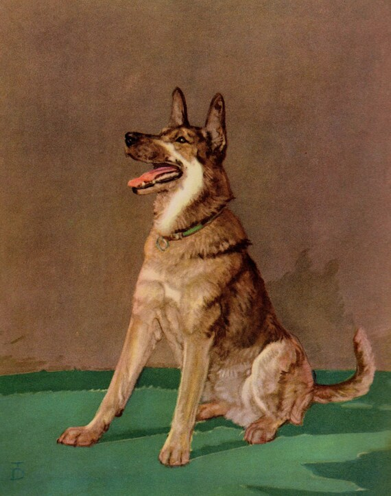1930 S Antique German Shepherd Dog Art Print Diana Thorne Etsy
