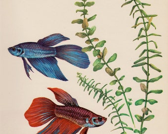 Vintage Fish Print Aquarium Fish Beach House Decor Tropical Fish Print Fishing Gallery Wall Art Ocean Decor Siamese Fighting Fish 3414