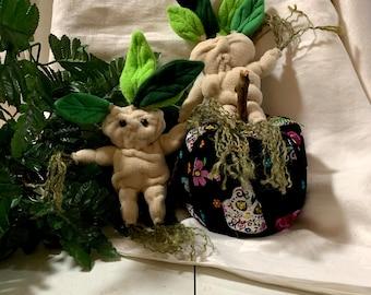 Mandrake, mandragora, mandrake root