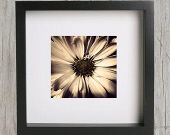 "8x8"" Daisy Fine Art Print"