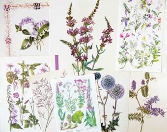 Purple Flowers, Botanical - Vintage Book Pages, Scrapbooking Paper Craft Pack PE507